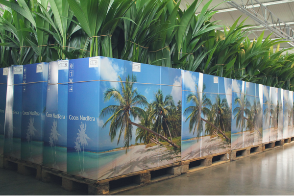 cocos nucifera verpakking